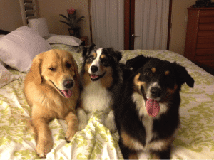 3 dogs on a bed