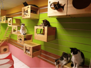 ultimate cat playground