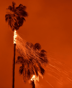 Santa Barbara Palm Trees Burning in The Thomas Fire