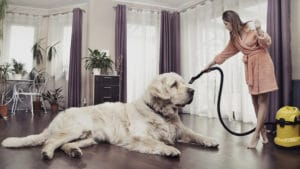 Young woman cleaning big cute dog to show staging a home