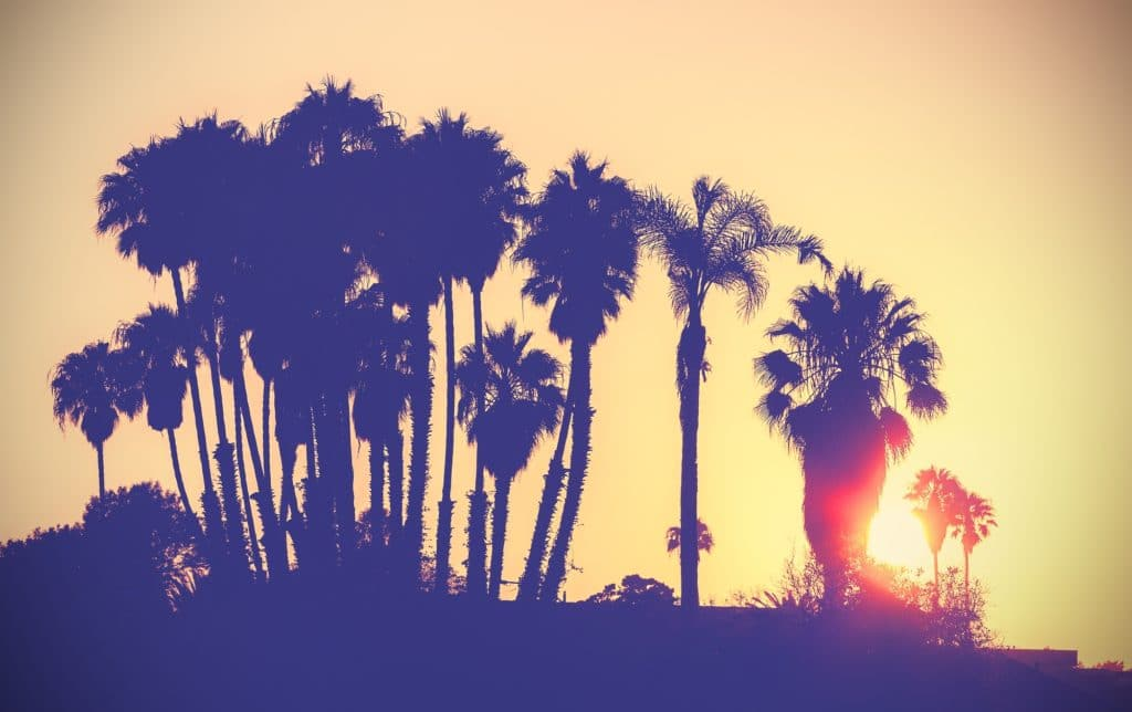 Vintage stylized picture of palms silhouettes at sunset, Santa Barbara California, USA.