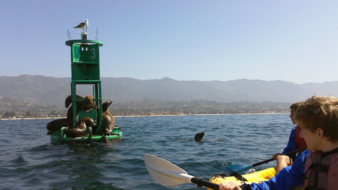 A kayak stops to take a look at seals and sea lions