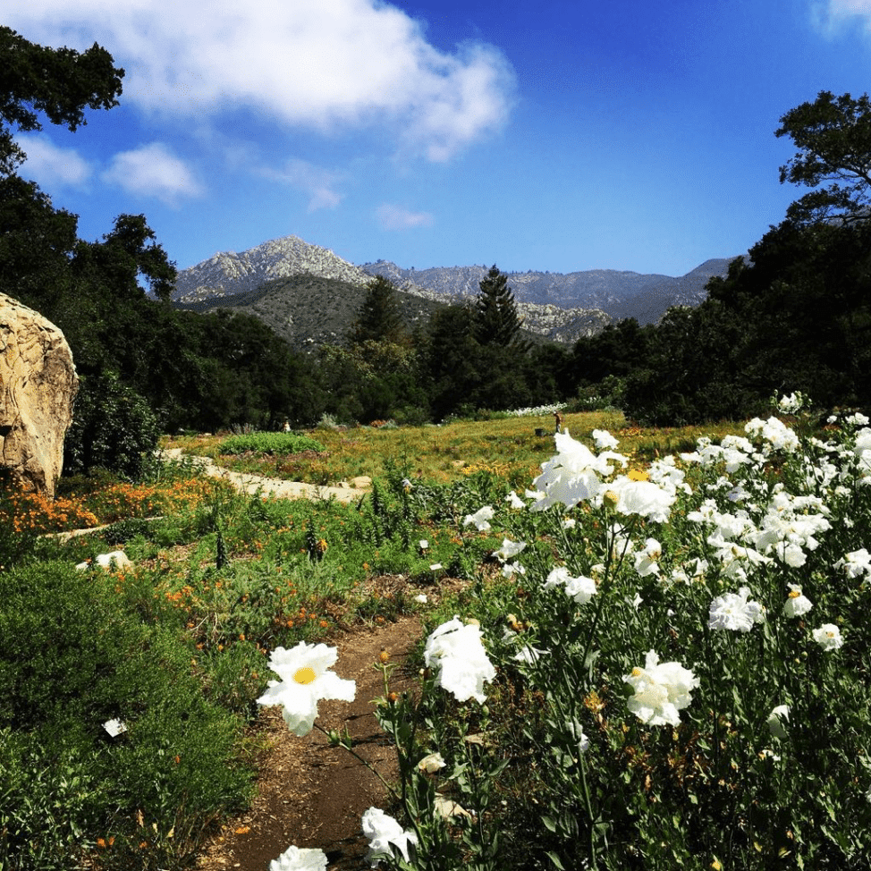 Majestic Santa Ynez Mountains, the perfect destination for a day trip in Santa Barbara