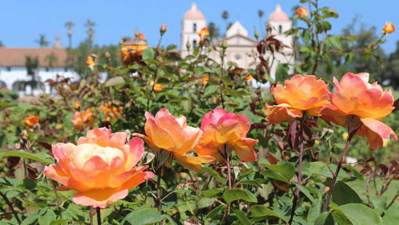 Old Mission Santa Babara peeking out behind beautiful roses